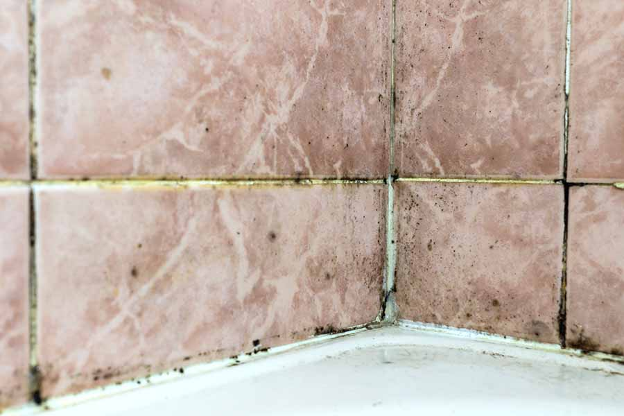mould growth on tiles requiring removal by waterproofing contractor singapore
